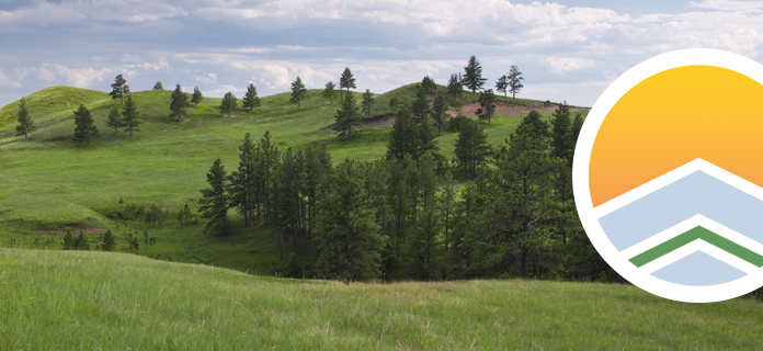 trees growing on rolling hills
